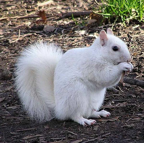 Fun things to do in Brevard NC : White Squirrel.